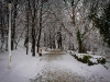 Iarna - Gradina Botanica